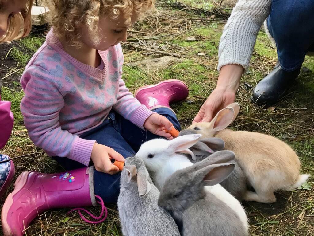 fedding the rabbit babies matar kaninungar Ullstorps stugor Skåne
