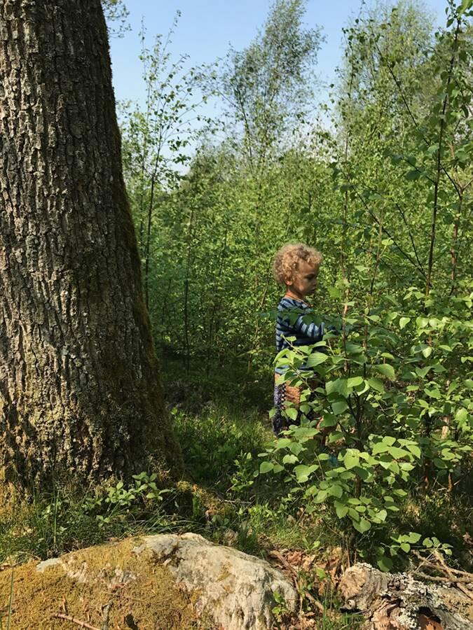 forestbath skogsbad bara vara retreat skåne ullstorps stugor
